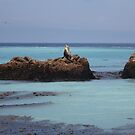 Seal Paradise by Bellavista2