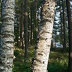 Gray Birch Trunks by KAREN SCHMIDT