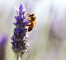 Lavender Bee by Cathy Middleton