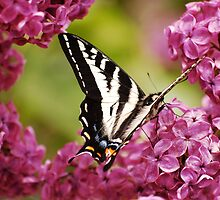 Butterfly Sitting on Flowers by dwservingHim
