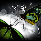 Butterfly Dreaming by Tanya Rossi