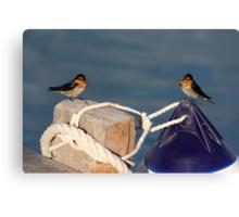 Welcome Swallows, Monkey Mia pier Canvas Print