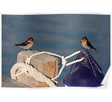 Welcome Swallows, Monkey Mia pier Poster