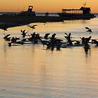 Sea gulls 2, Coral Bay, sunset by ladieslounge