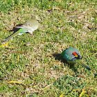 Grass Parrots by Gregory John O'Flaherty