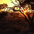 Myall Sunrise by Penny Kittel