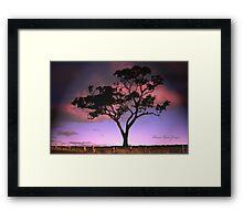 Solitree Framed Print