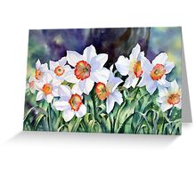 Narcissi Greeting Card