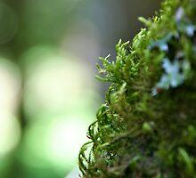 Green Curls by Gursimran Sibia