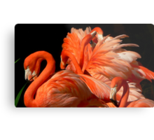 A Bouquet of Fluffy Flamingoes Metal Print