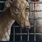 Greyhound by Lace