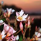 Pink flowers by the ocean by ♥⊱ B. Randi Bailey