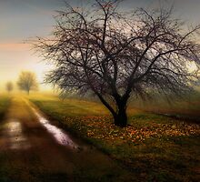 Apple Tree by Patrick  McMullen