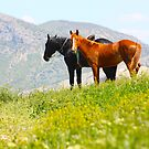 Black and red horses in the mountains by a1luha