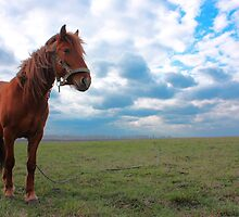 Horse Grazing in a field by a1luha