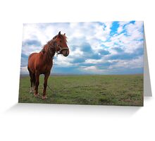 Horse Grazing in a field Greeting Card
