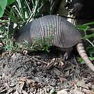 Armadillo by May Lattanzio