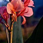 Sunrise by theastrarium