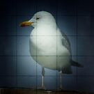 seagull by codswollop