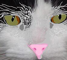Digital Cat ~Take 2~ by Sandra Cockayne