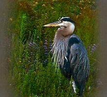 Heron Thoughts by bicyclegirl