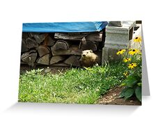 How Much Wood Can This Woodchuck Chuck? Greeting Card