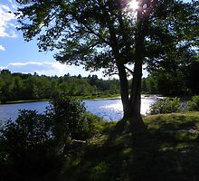 Sunshine at the Mill Pond by MaryinMaine