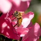 Honey Bee On Pink Flower by David Friederich