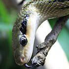 Snake by sherele