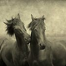 horses themselves they don't whisper, they just talk by LarsvandeGoor