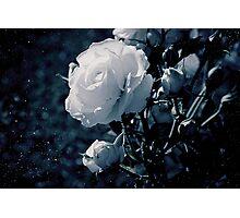 Moonflower Photographic Print