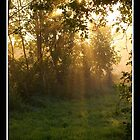 Autumns early morning rays by Gordon Holmes