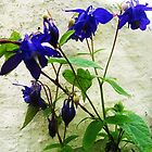 Blue Flowers... by Fuschia