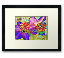 Colorful daffodils Framed Print