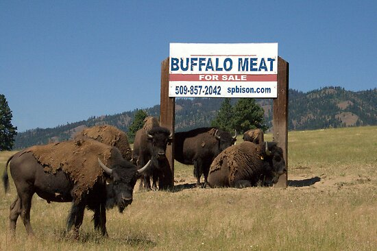 Buffalo What??? by Cheri Bouvier-Johnson