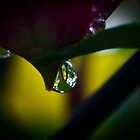 Dew Drop by Raymond Kundra