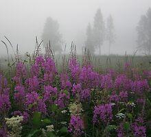 Fog and fireweed by tanmari