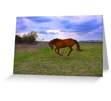 Horse Grazing in field  Greeting Card