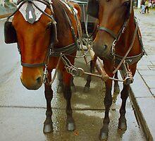 Vienna horses by a1luha