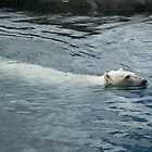 Polar Bear by Seth LaGrange