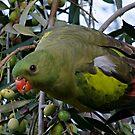 Regent Parrot Female by Rick Playle