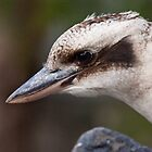 Kookaburra by Ben Breen