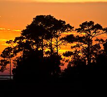 Sunset Pines by Rick  Bender
