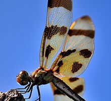 Golden Wing by michaelasamples