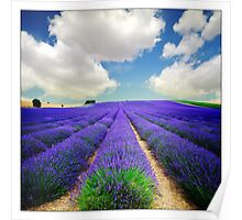 Lavender Field - (3a) Poster