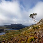 High Country, Cradle Mountain NP by Harry Oldmeadow