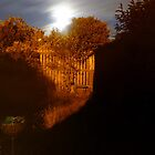 Garden At night by Thomas Scurr