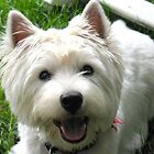 The Year of the Westie by MarianBendeth