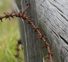 Barbed Wire by ChrisMcC13