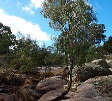 Eucalyptus tree at Hughes Creek - Victoria, Australia by Imagebydg